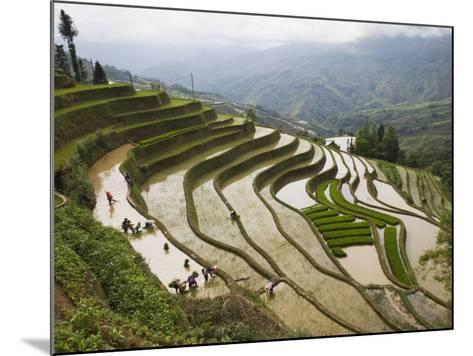 Terraced Rice Fields, Yuanyang, Yunnan Province, China-Angelo Cavalli-Mounted Photographic Print