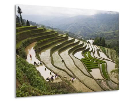 Terraced Rice Fields, Yuanyang, Yunnan Province, China-Angelo Cavalli-Metal Print