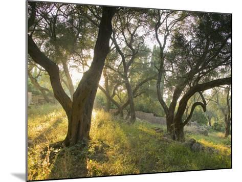 Evening Light Shining Through Olive Trees, Paxos, Ionian Islands, Greek Islands, Greece, Europe-Mark Banks-Mounted Photographic Print