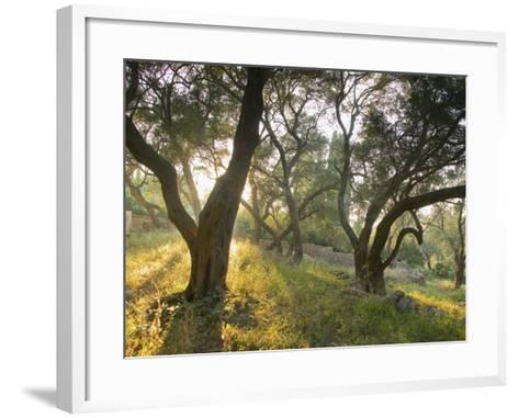 Evening Light Shining Through Olive Trees, Paxos, Ionian Islands, Greek Islands, Greece, Europe-Mark Banks-Framed Art Print