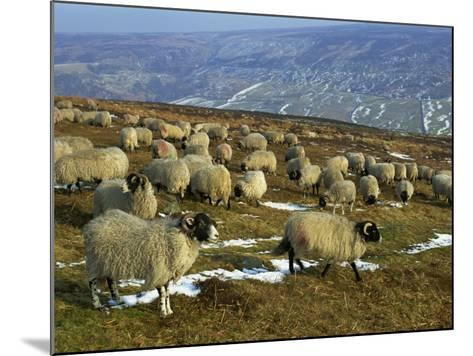 Sheep in Winter, North Yorkshire Moors, England, United Kingdom, Europe-Rob Cousins-Mounted Photographic Print