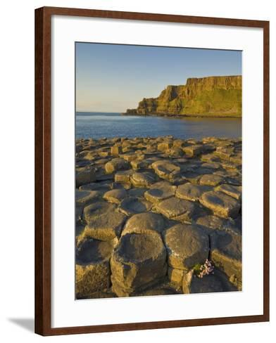 Giant's Causeway Near Bushmills, County Antrim, Ulster, Northern Ireland, UK-Neale Clarke-Framed Art Print