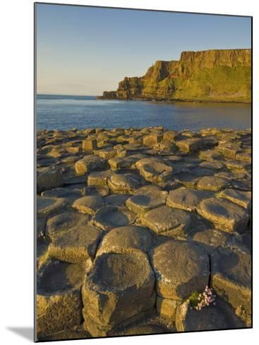 Giant's Causeway Near Bushmills, County Antrim, Ulster, Northern Ireland, UK-Neale Clarke-Mounted Photographic Print