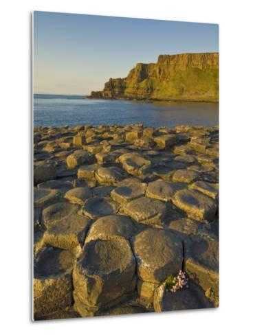 Giant's Causeway Near Bushmills, County Antrim, Ulster, Northern Ireland, UK-Neale Clarke-Metal Print