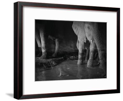 Elephants drink from a waterhole made by swimming pool overflow-Michael Nichols-Framed Art Print