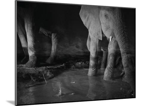 Elephants drink from a waterhole made by swimming pool overflow-Michael Nichols-Mounted Photographic Print