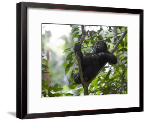 A small sapling is Kusu's watchtower in the Congo jungle-Ian Nichols-Framed Art Print