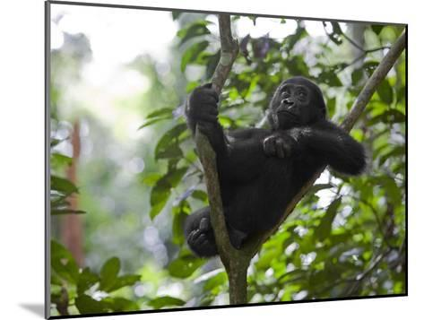 A small sapling is Kusu's watchtower in the Congo jungle-Ian Nichols-Mounted Photographic Print