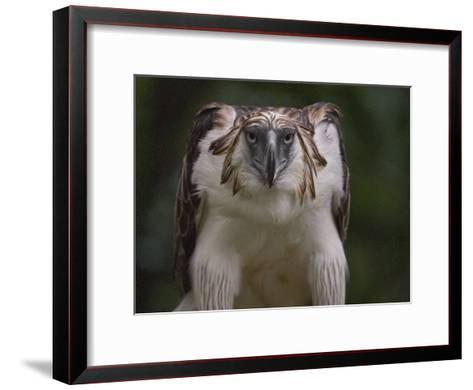 Portrait of a captive Philippine eagle-Klaus Nigge-Framed Art Print