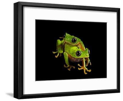 A pair of endangered lemur leaf frogs-Joel Sartore-Framed Art Print