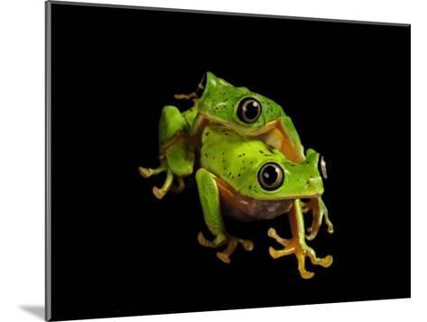 A pair of endangered lemur leaf frogs-Joel Sartore-Mounted Photographic Print
