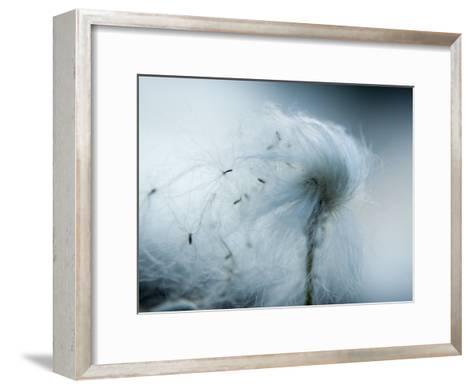 Silken fibers of cotton grass-Michael Melford-Framed Art Print