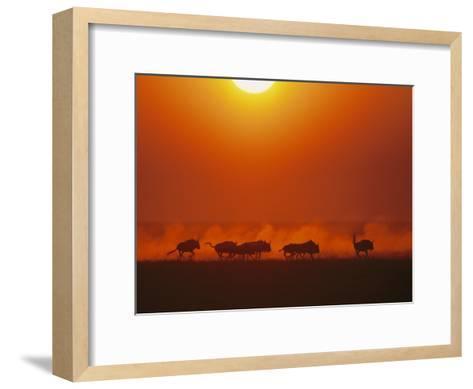Wildebeests in twilight, Zambezi River area-Chris Johns-Framed Art Print
