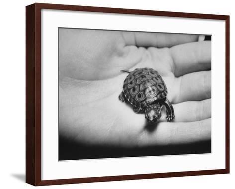 Pet Turtle-Ralph Morse-Framed Art Print