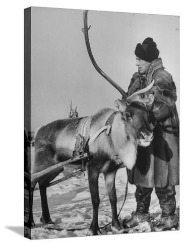Lapp Tribesman Tending to His Reindeer-Mark Kauffman-Stretched Canvas Print