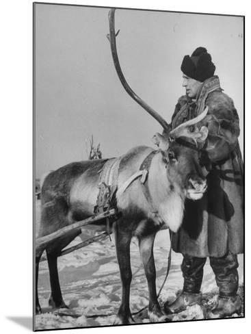 Lapp Tribesman Tending to His Reindeer-Mark Kauffman-Mounted Photographic Print