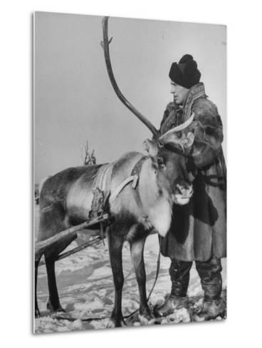 Lapp Tribesman Tending to His Reindeer-Mark Kauffman-Metal Print