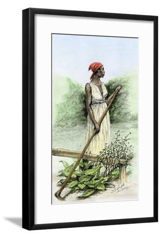 Slave Woman Hoeing Sugar Plants on a Plantation in Louisiana, 1800s--Framed Art Print