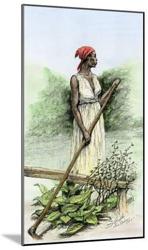 Slave Woman Hoeing Sugar Plants on a Plantation in Louisiana, 1800s--Mounted Giclee Print