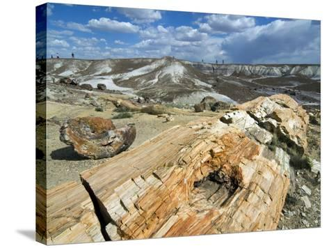 Petrified Logs Exposed by Erosion, Painted Desert and Petrified Forest, Arizona, Usa May 2007-Philippe Clement-Stretched Canvas Print