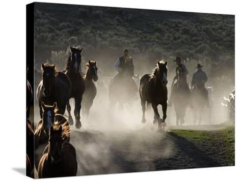 Cowboys Driving Horses at Sombrero Ranch, Craig, Colorado, USA-Carol Walker-Stretched Canvas Print