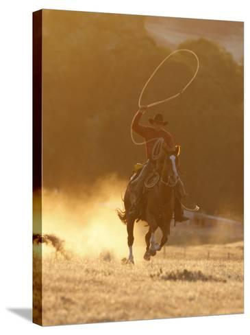 Cowboy Galloping While Swinging a Rope Lassoo at Sunset, Flitner Ranch, Shell, Wyoming, USA-Carol Walker-Stretched Canvas Print