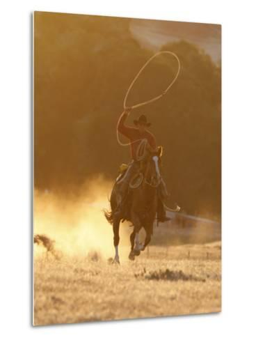 Cowboy Galloping While Swinging a Rope Lassoo at Sunset, Flitner Ranch, Shell, Wyoming, USA-Carol Walker-Metal Print