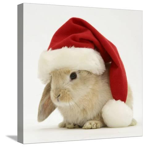 Rabbit Wearing a Father Christmas Hat-Jane Burton-Stretched Canvas Print