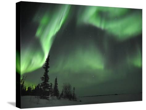 Northern Lights Northwest Territories, March 2008, Canada-Eric Baccega-Stretched Canvas Print