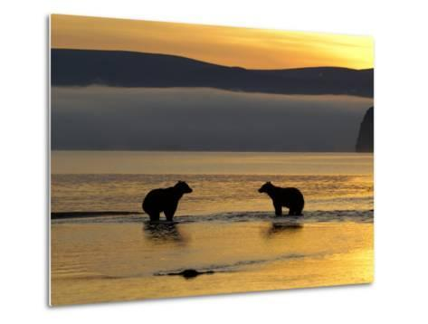 Brown Bears in Water at Sunrise, Kronotsky Nature Reserve, Kamchatka, Far East Russia-Igor Shpilenok-Metal Print