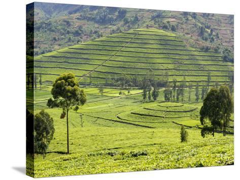 Tea Plantation Near Nyunguwe, Rwanda, Africa-Eric Baccega-Stretched Canvas Print