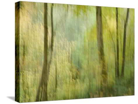 Impression of an Autumn Forest, North Lanarkshire, Scotland, UK, 2007-Niall Benvie-Stretched Canvas Print