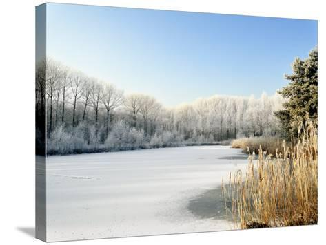 Hoarfrost Covered Trees Along Frozen Lake in Winter, Belgium-Philippe Clement-Stretched Canvas Print