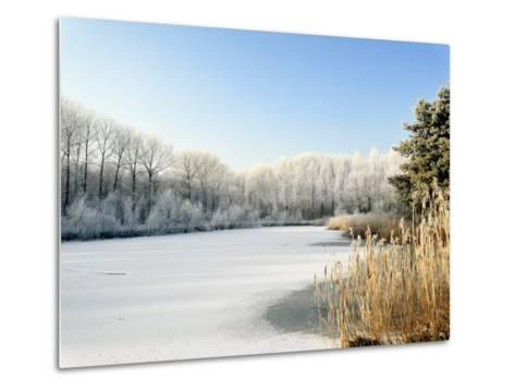 Hoarfrost Covered Trees Along Frozen Lake in Winter, Belgium-Philippe Clement-Metal Print