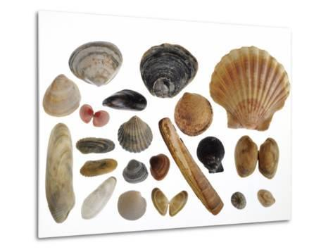 Collection of Shells from the North Sea-Philippe Clement-Metal Print