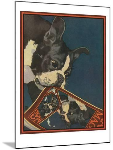 Nature Magazine - View of a Boston Terrier Tearing Up a Nature Magazine with its Picture, c.1931-Lantern Press-Mounted Art Print