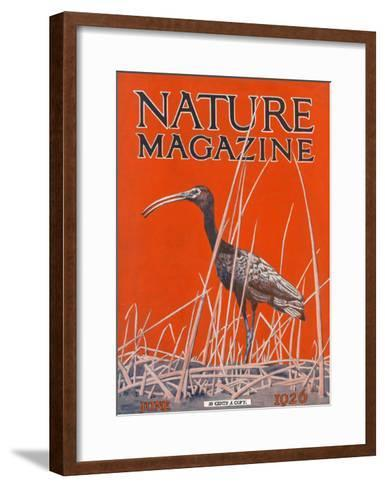 Nature Magazine - View of a Ibis in a Marsh, c.1926-Lantern Press-Framed Art Print