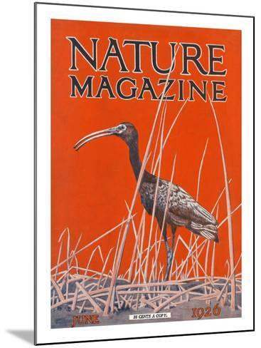 Nature Magazine - View of a Ibis in a Marsh, c.1926-Lantern Press-Mounted Art Print