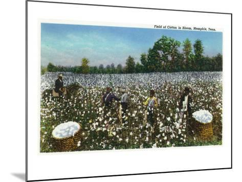 Memphis, Tennessee - View of a Field of Cotton in Bloom, Cotton Workers, c.1942-Lantern Press-Mounted Art Print