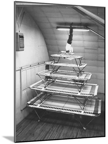Six Sizes of Trampolines Manufactured by Nissen Trampoline Co--Mounted Photographic Print