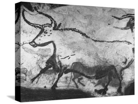 Prehistoric Cave Painting of an Animal-Ralph Morse-Stretched Canvas Print