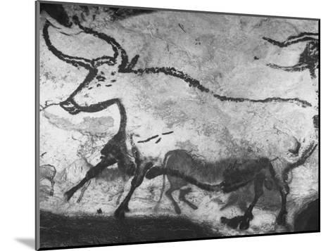 Prehistoric Cave Painting of an Animal-Ralph Morse-Mounted Photographic Print