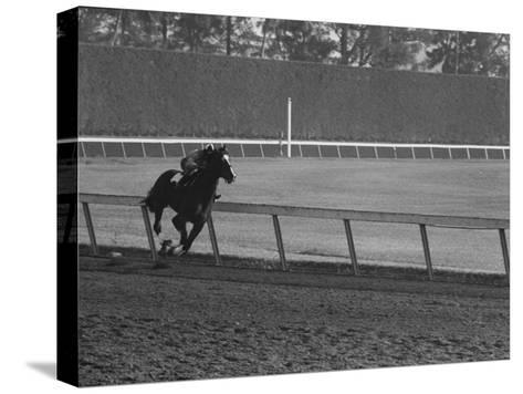 Horse Ridan During Race--Stretched Canvas Print