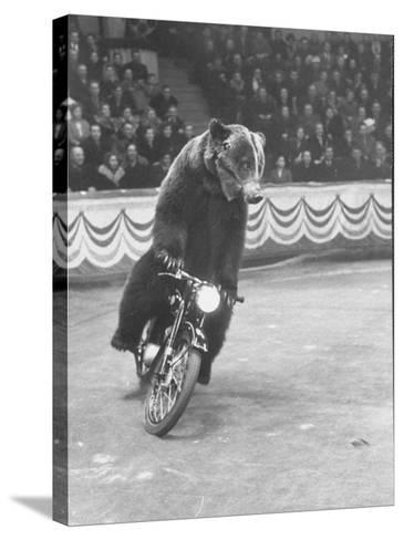 Extraordinarily Skillful Russian Performing Bear Driving a Motorcycle-Carl Mydans-Stretched Canvas Print