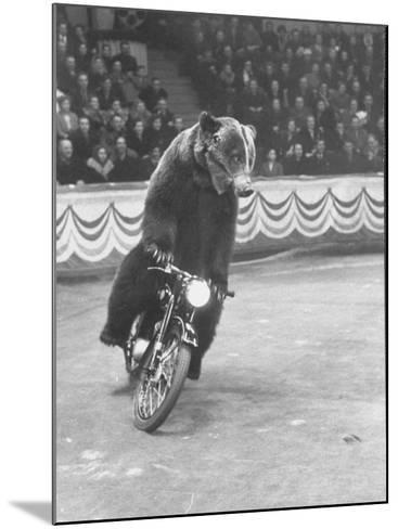 Extraordinarily Skillful Russian Performing Bear Driving a Motorcycle-Carl Mydans-Mounted Photographic Print