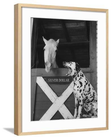 Dalmatian Stable Dog at Mystery Stables--Framed Art Print