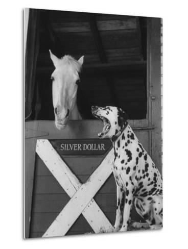 Dalmatian Stable Dog at Mystery Stables--Metal Print