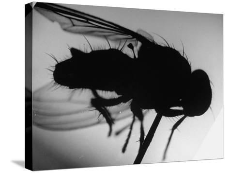Fly--Stretched Canvas Print