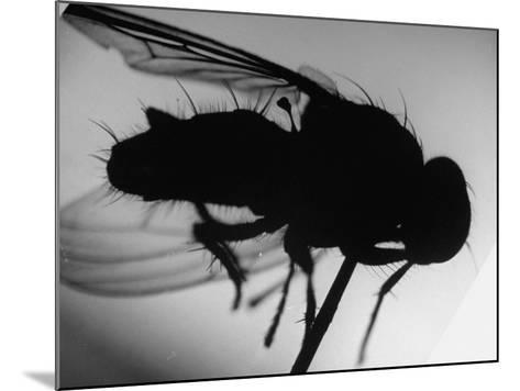 Fly--Mounted Photographic Print
