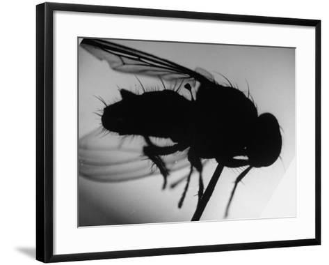 Fly--Framed Art Print